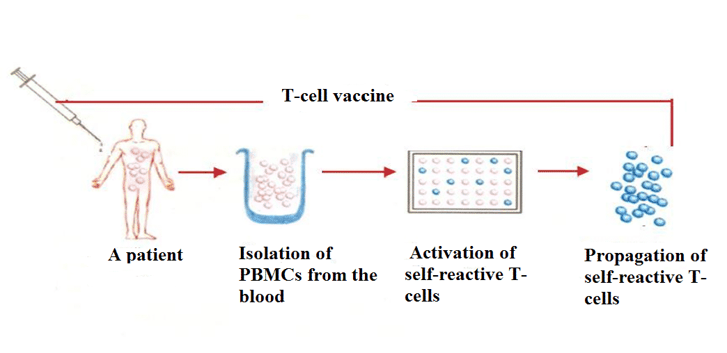 Preparation of polyclonal T-cell vaccine.